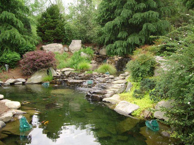Разрабатываем дизайн пруда для дома