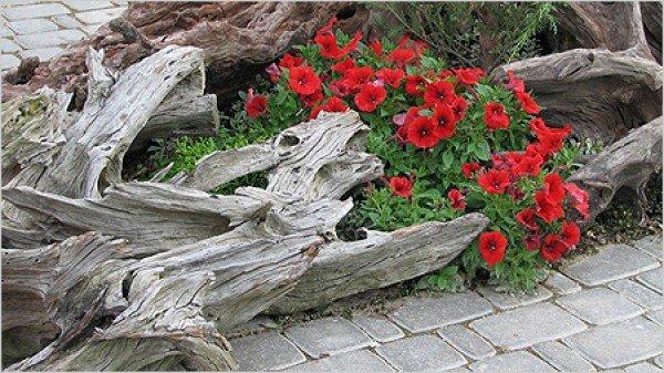 Рутарий – сад из пней и коряг