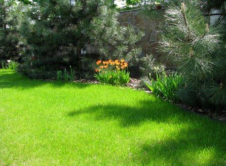 Идеальный газон: шаг за шагом