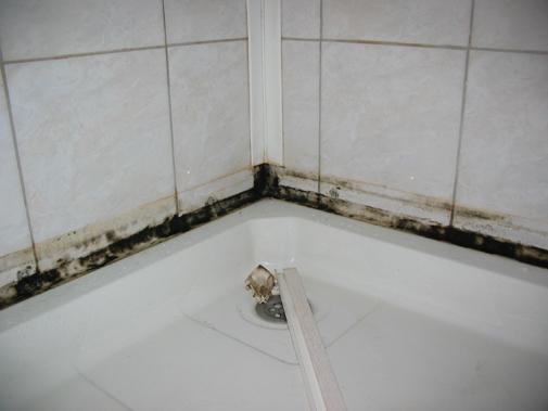 Как бороться с плесенью и грибком в ванной комнате