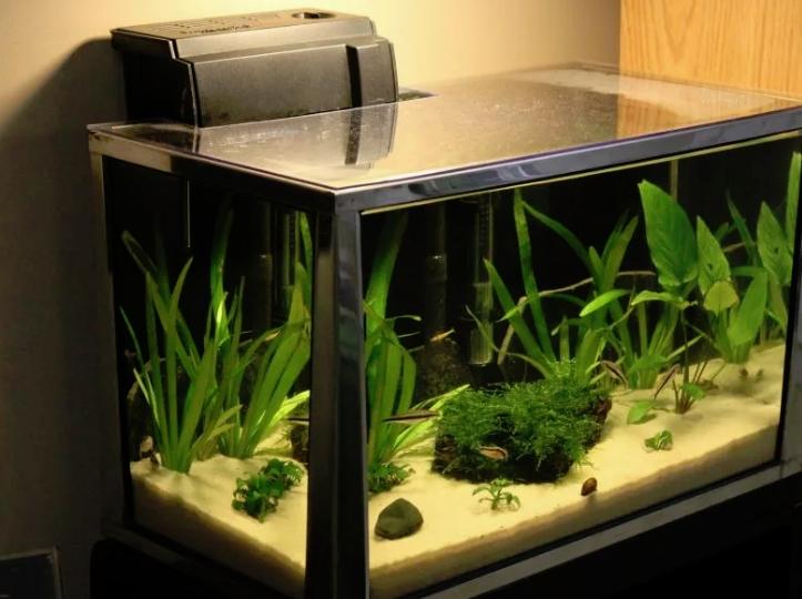 Какие основные факторы содержания аквариумов