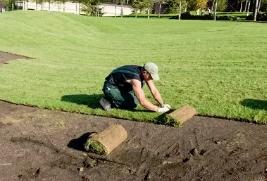 Этапы проведения ландшафтного озеленения